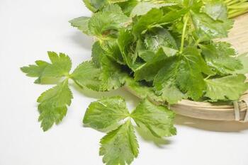 香りと食感がいい「セリ」を主役に!簡単・美味しい人気レシピ17品