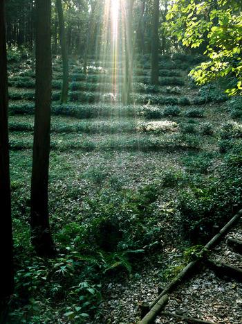 森の奥に、こっそりトトロがかくれんぼしていそう。そんな気分に浸りながら、深呼吸をして歩いてみるとわくわくしますね。公式HPにおすすめのお散歩コースが紹介されているので、初めての方も歩きやすいですよ。