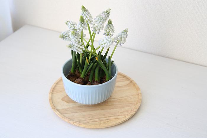 円形のシンプルな木製トレイを鉢植えの受け皿として活用。鉢植えをそのまま飾っても良いですが、木製トレイの上にのせることでよりおしゃれな空間に。インテリアになじませるひと工夫が素敵です♪