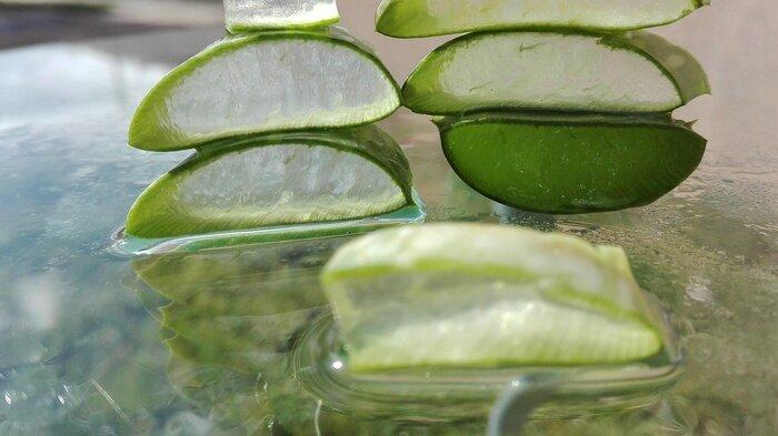 〈材料〉 アロエベラ 5~6本 砂糖 大さじ5 レモン汁 大さじ1  〈つくり方〉 ①アロエの両サイドのトゲを切り、皮をむく。ゼリー状の部分だけにする ②食べやすいサイズに切った①を沸騰したお湯でひと煮立ちさせ、ザルにあげる ③鍋にアロエをもどし、砂糖とレモン汁を加えてゆっくりかき混ぜながら弱火で5~10分煮る ④粗熱をとり、冷蔵庫で冷やす