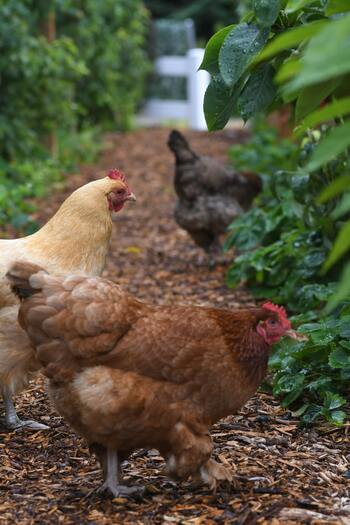 卵は春が旬!?お気に入りの「卵焼き」レシピを探してみよう