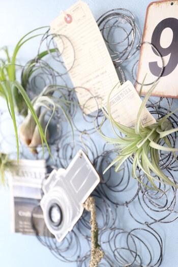 針金をくるくると巻いて組み合わせたディスプレイラックは、何も飾らなくても素材感とボリュームでまるでアートのよう。カードやエアプランツなどを挟んで飾ってみましょう。