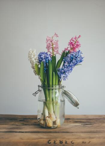 水耕栽培のイメージが強いヒヤシンスですが、切り花としても楽しめます。こちらの画像では、ガラスのジャーポットを花瓶代わりに。パステルカラーのヒヤシンスなら、複数の色を混ぜてもうるさくなりません。