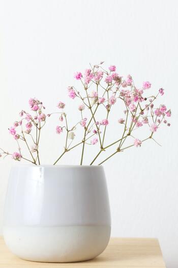 雪のような白い花がかわいいカスミソウ。他の花の引き立て役のように使われることが多いですが、実は主役級の存在感も持ち合わせています。  はかなげな見た目とは違ってカスミソウの花もちは抜群です。涼しい時期なら3週間くらいもつことも。水に挿しっぱなしにしていると、いつの間にか勝手にドライフラワーになってる手のかからなさも魅力的ですね。