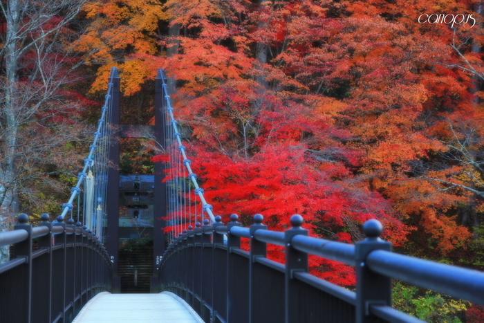 四季折々の移り変わる木々や花々、天狗岩をはじめとした奇岩、そしてエメラルドブルーの清流に彩られる渓谷も、塩原温泉の見どころのひとつ。渓谷には多種多様な吊り橋がかけられており、そこから見られる景観と合わせて名所になっています。一番有名なのが、塩原ダムにかかる全長320mのもみじ谷大吊橋。振り返りたくなるほど景色の美しい回顧の吊橋や、紅葉の季節鮮やかな赤色に囲まれる紅の吊橋もおすすめです。