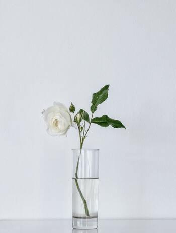 女王の品格ただようバラも、春にピークを迎える花です。バラを長持ちさせるコツは、直射日光やエアコンの風があたらない場所に置くこと。涼しくて風通しのいい場所がベストです。