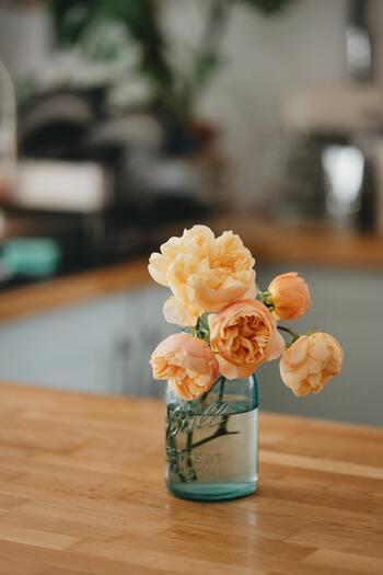 春はなにを飾る?玄関に、リビングに、「季節の植物」を暮らしに添えて