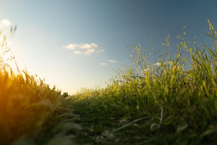今だからこそ始めたい「田舎暮らし」の魅力と移住のポイント