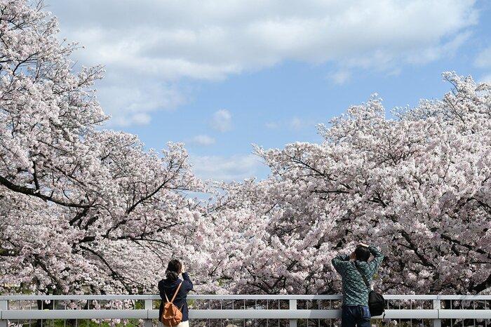 うららかな春の日に行きたい【東北】の絶景*おすすめドライブコース9選