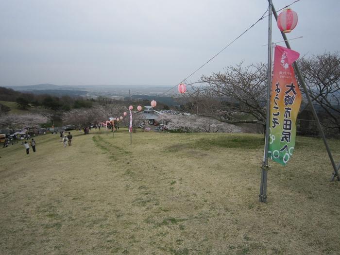 山頂からは遠く仙台市までもが見渡せ、その絶景と桜を一緒に楽しむことができます。自然公園になっており、桜をもっと間近に見ながら散策できる遊歩道も整備されていますよ。標高差があるので、ふもとが散りはじめていても頂上付近では満開ということも。例年の見頃は、4月の半ばから5月初めまでです。