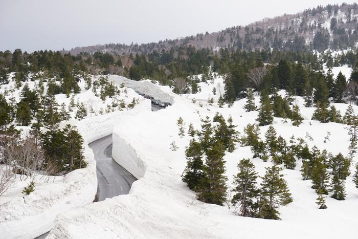 八甲田山は、青森県の中でも雪深い山間部。そのふもとにある酸ヶ湯温泉の八甲田ホテルと、谷地温泉を結ぶ国道103号線が、「八甲田十和田ゴールドライン」です。なんとこの雪の回廊は、地元の「八甲田除雪隊」という民間業者が約1ヶ月をかけてつくるのだそう。高いところでは15mにもなりますよ。
