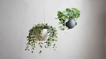 吊り下げるタイプのプラントポットに、鉢植えをそのまますっぽりと入れれば吊るすインテリアに。天井から吊るせば、場所を取らずにグリーンを楽しむことができます。  こちらは軽く割れにくい樹脂製のポットを採用しているので、吊るしても不可がかかりにくいのが特徴です。