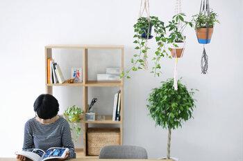 気軽に始める緑のある暮らし。素敵な「グリーンの飾り方」アイデア集