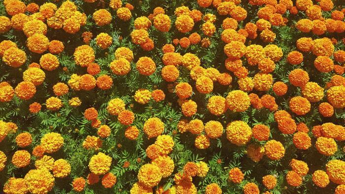 球根は種類によって、春、夏、秋と、植える時期が異なります。植えたいお花の植え付け時期を把握しておきましょう。  ・春植え球根…3月~4月(ダリア、グロリオサ、カラー、グラジオラス、アマリリス、カンナなど) ・夏植え球根…8月~9月(ネリネ、コルチカム、リコリス、ポリキセナ、サフランなど) ・秋植え球根…9月~11月(チューリップ、ヒヤシンス、クロッカス、スイセン、スノードロップ、ユリなど)  厳密には地域によって違いがあるので、気温もチェックして植え付け時期を選ぶのがおすすめです。