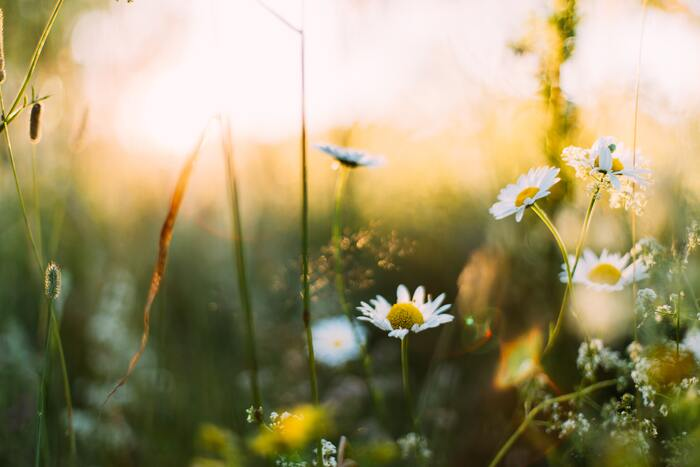 周りの人間や物事、また自分自身に過度に期待してしまうと、思うようにいかなかった時にマイナスな感情に陥ってしまいます。この世に完璧な人間なんていないですし、計画通りに事が運ばないのが「人生」です。「うまくいったらラッキー♪」位の気持ちでいたほうが、精神的に楽になることがありますよ。
