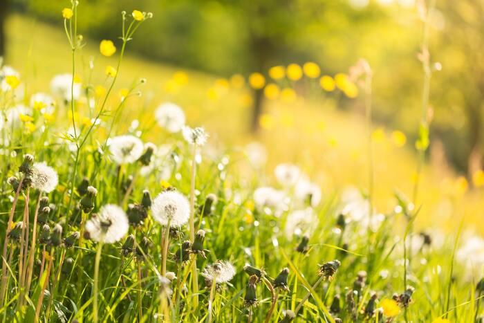 大定番ともいえるスピッツの名曲。その名も「春の歌」。CMソングとしても使われていたことから知っている方も多いはず。時代を超えても色あせない伸びやかなメロディーは爽快です。