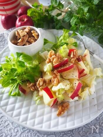 白菜の芯の近くは甘味が強く、生で食べても美味しい部分なんです。水々しい白菜は、りんごと一緒に洋風のサラダに。  りんごと相性の良いくるみを散らして、おしゃれなフルーツサラダの出来上がり。