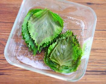 塩漬け保存は、容器に大葉を入れて塩をふる、というのを一枚ずつ繰り返していく方法です。簡単なのに、おにぎりやお弁当にも活用しやすく、用意しておくととても便利です!
