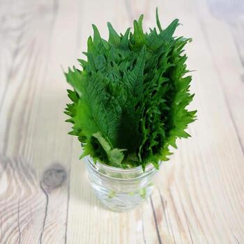 大葉の茎の切り口部分が水に浸かるように、容器に少量の水を入れて保存する方法です。この時、葉の部分は水に触れないようにしましょう。ふたやラップで密閉し、野菜室で保存するのがおすすめです。