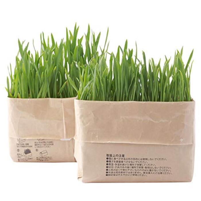 無印良品 猫草栽培セット 2セット(4個)