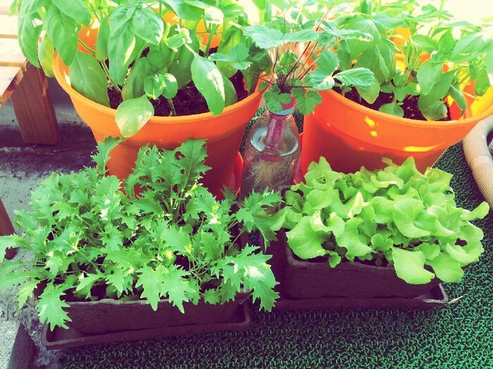 野菜の品種によって日当たりを好むもの、乾燥が苦手なものなどさまざま。育てる野菜を決めたら栽培方法を確認しましょう。購入する種のパッケージ裏に記載されているので、確認しておきましょう。