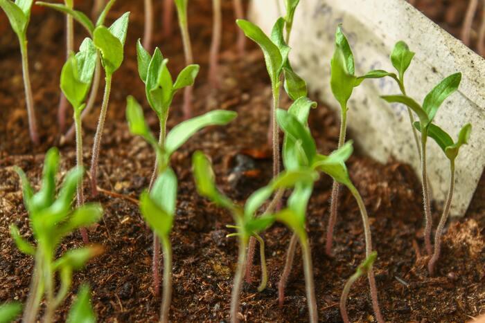数日ごとや一週間ごとに植物絵日記として記録をつけておけば、小さな変化にも気づきやすくなります。さらに時間の変化とともに植物が成長している様子がよく分かって、もっと植物がいとおしく感じられますよ。