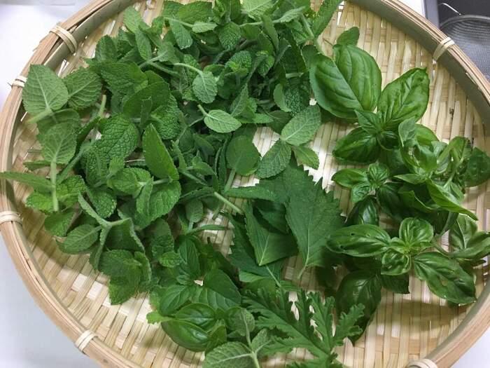 初心者向けのキッチン菜園。夏に美味しい「薬味野菜」を育てよう♪