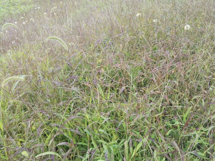 大変な草取りが年々楽になっていく!?効率の良い「雑草対策」が知りたい