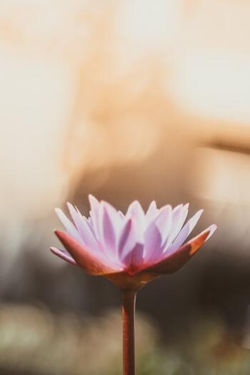 こころを整えるために。暮らしに取り入れたい「仏の言葉」