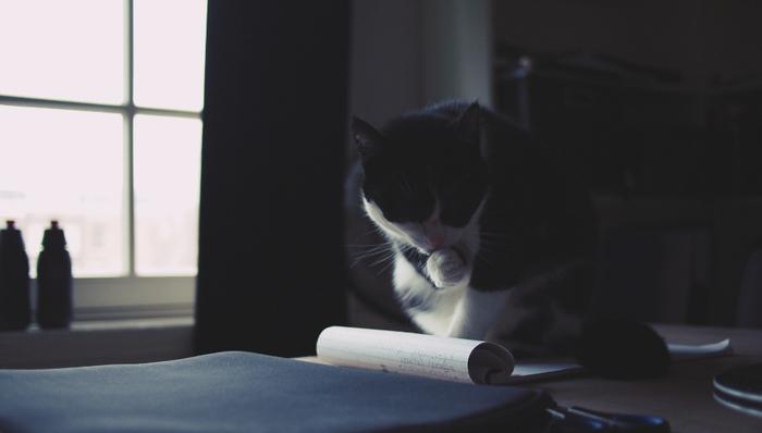 猫好きなら一度は憧れる「人と話す猫」が登場する作品です。ほのぼのとミステリー談義を交わす二人に、思わず笑顔がこぼれるでしょう。後半は一転して現実の生々しい事件に発展し、本格的な謎解きが始まります。 ラストには驚きのどんでん返しがあり、気持ちよく騙される感覚を味わえますよ。