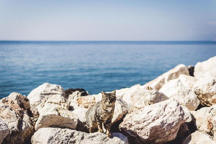 猫だらけの島が舞台なだけあり、いたるシーンで猫が登場します。そのどれもが可愛らしく、猫好きなら癒されること間違いなし!ほのぼのしているようで切れ者、という主人公のキャラクターも好印象。短編集ですが、各作品の中に最後のストーリーに繋がる伏線があり、読みごたえがありますよ。
