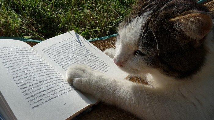 猫が主人公という大胆な設定から、ライトなミステリー小説だと思われがちな『三毛猫ホームズの推理』。しかしトリックや謎解きの過程は本格ミステリーそのものです。ユーモラスな場面も多く読みやすい文体のため、すらすら読めますよ。
