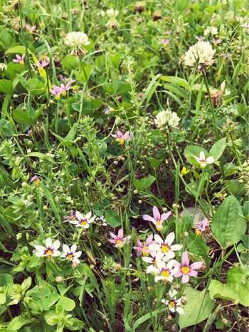 また、地下茎や株を大きくさせないことと同時に、種を付けさせないことも草取りを楽にするポイントです。 春は雑草といってもお花がかわいらしいく、楽しめる植物がたくさんありますよね。 そんなときは、花期が終わり種を付ける前に抜くようにすると良いでしょう。