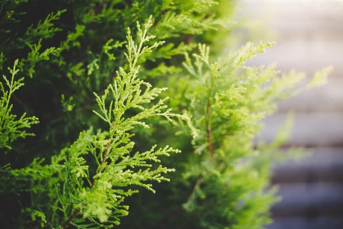 静けさの中に温かみを感じるようなヒノキは、まさに森の香り。心を落ち着けてくれるリラックス効果の他、消臭や雑菌などの効能も期待できます。