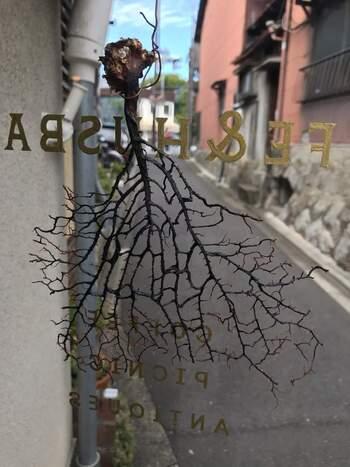ウミウチワの形は木の幹のように広がっています。その様子はとても神秘的な美しさ。飾るだけで独特の存在感を放ち、一味違った印象的なインテリアに。