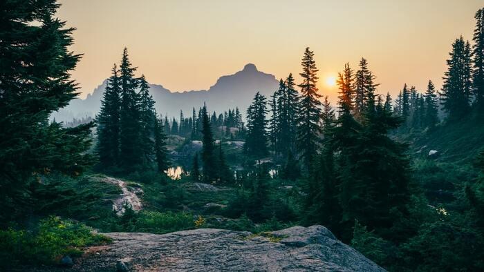 気分は森林浴!深呼吸したくなる「森の香り」集めました