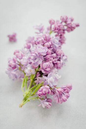 部屋をパッと華やかに飾ってくれるのはもちろん、イライラを緩和したり気分を引き上げてくれる効果も期待できるフローラル系の香り。根強い人気がある香りを一通りみてみましょう。  ・ローズ:優雅さと上品を兼ね備えた華やかな香り ・ジャスミン:オリエンタル系の濃厚で甘い香り ・ミュゲ(すずらん):石鹸に近い清楚な香り ・ゼラニウム:ローズにハーブの青みを足した香り ・ネロリ:中程度の甘さにほんのり苦味がある香り ・ライラック:甘さの奥に爽やかさを感じる香り ・チュベローズ:南国の花のようなトロピカルな香り  よりエキゾチックな雰囲気が欲しいなら、ムスクやパチュリを加えた奥深い香りを選んでみるのもおすすめです。