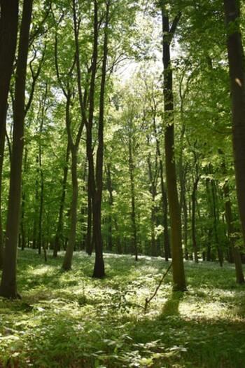 ウッディ系のルームスプレーで部屋を包み込めば、森林浴のような気分を楽しめます。静かな場所を訪れたような安心感や自然の香りに癒されたい方は、まずこちらをチェック。  ・ティーツリー:ユーカリのような清涼感のある香り ・ヒノキ:日本人に馴染みのある和風な木の香り ・サイプレス:ヒノキ風呂のような柔らかな香り ・サンダルウッド:寺院で漂うような白檀の香り ・シダーウッド:スギなどの木々にスパイシーさを加えた香り  新鮮な植物の香りは数あるフレグランスの中でも使いやすく、芳香剤やディフューザーなどの身近なアイテムにも多く用いられています。
