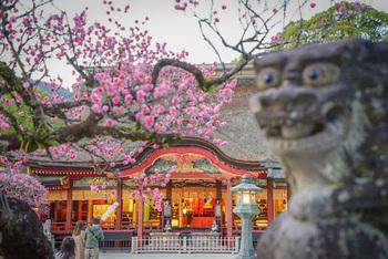 梅、桜、菖蒲、菊など四季折々の花や自然が美しく、訪れる時期によってそれぞれの風景を楽しめるのも魅力です。