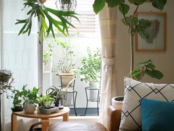 ベランダや部屋の中に植物があると、なんだか気持ちも和みますよね。ハーブに限らず、この時期は水をたくさん浴びて生き生きとした植物の様子が楽しめます*