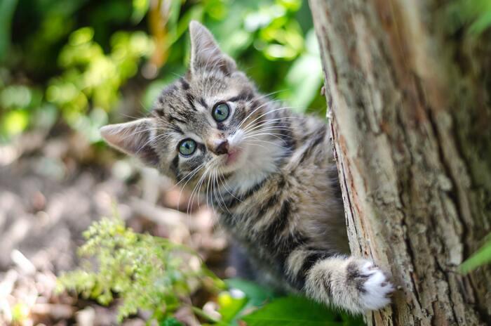 大切な猫を一生懸命さがす男の子をよそに、街中の冒険を楽しむ猫。2人のギャップにはクスッと笑ってしまいます。さて、男の子は無事に猫と出会えるでしょうか? どこに男の子と猫がいるのか、見つけ出すのも楽しい絵本です。