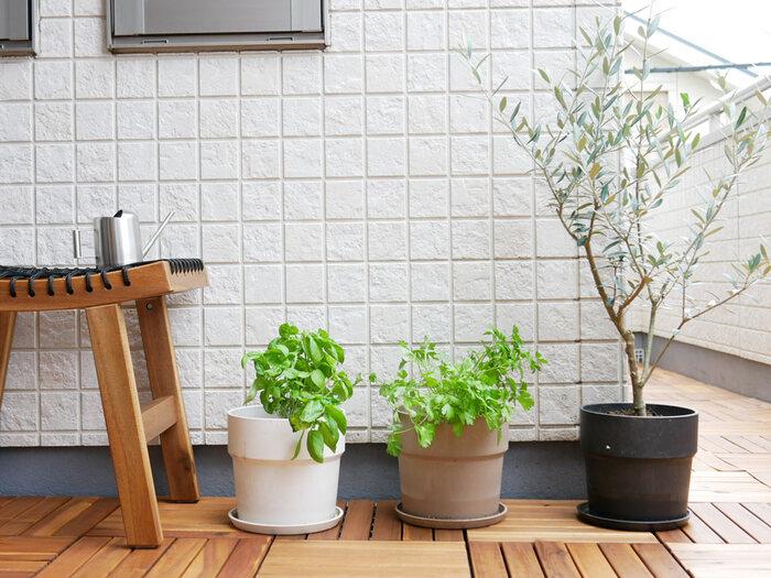 スッキリほのかに香るハーブなら、梅雨の鬱憤とした気分も晴れやかにしてくれること間違いなし。さらにハーブ特有の香りや成分は、自然と虫を近づけにくくしてくれる効果も期待できるんですよ。中でもバジル、ミント、レモンバームなどは適度な湿度を好む種類なので、この時期に新しく迎えるにはぴったりな植物です。