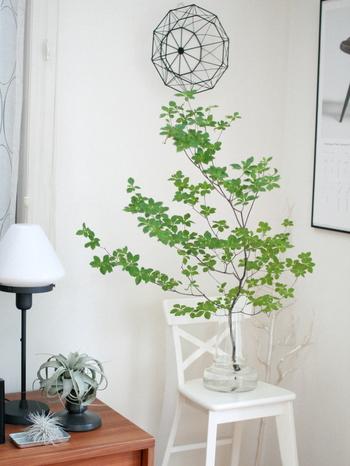 日持ちのいい枝もののひとつである「ドウダンツツジ」。暑い時期でも2週間から1か月くらいは持つことが多いようです。手入れ次第で、長持ちさせることができるので、こまめにチェックしてあげてくださいね。