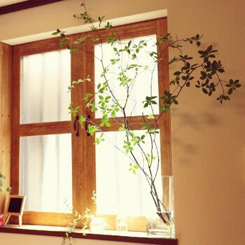 窓の高さいっぱいまで広がった枝ぶりの大きな「ドウダンツツジ」。まるで外から入り込んできたかのような自然な佇まいにびっくりしてしまいます。  ナチュラルテイストの窓枠によく似合っていますね。