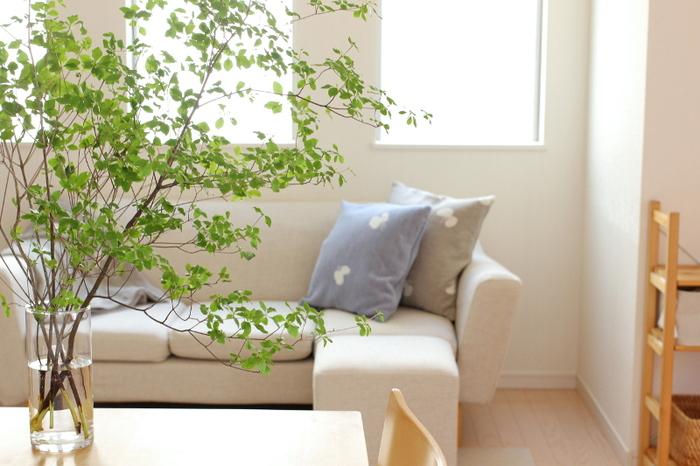 空間がすっきり見える。人気の枝物・ドウダンツツジのある暮らし、始めませんか