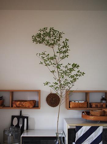 一本の観葉植物のように生けた「ドウダンツツジ」。細い枝と薄い葉が可憐な印象なので、長さがあっても圧迫感がありません。  枝に触れるとひっくり返しやすくなるので、普段の動線を考えて置き場所を選ぶといいですね。