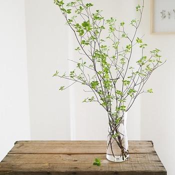初夏ごろまでの出始めの新芽は水下がりしやすいので、深水での水揚げがおすすめ。  根元を割った後に、新聞紙で全体を包み、30cmぐらい茎が浸かるようにします。  このとき、延命剤などを入れておくと効果的。しっかり水を吸い上げたら、花瓶に生けましょう。