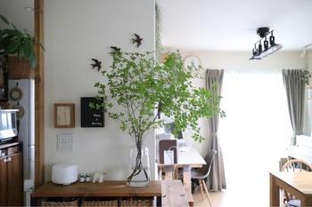 リビングの壁からすこしだけ顔を出すように飾った「ドウダンツツジ」は、反対側から見てもグリーンの気配を感じられるようになっています。  花束のように広がる枝ぶりは生命力に満ち溢れて、ちらりと目に入るだけでも元気をもらえますよね。