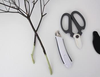 「ドウダンツツジ」の根元をカッターやハサミなどを使って削ります。根元から3cmほど削ればいいでしょう。