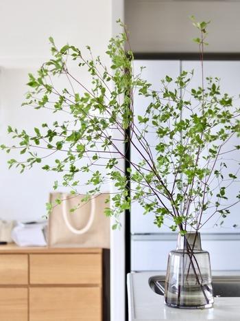 大きな空間を飾るのによく使われる「ドウダンツツジ」。リビングで枝を大きく広げた姿は、開放的でとても素敵。  枝が広がるように生ける際には、花瓶はどっしりとした安定感が不可欠です。ひっくり返らないように、バランスに気を付けましょう。